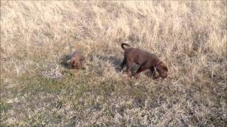 Ginger And Creed's Morning Walk And Playtime