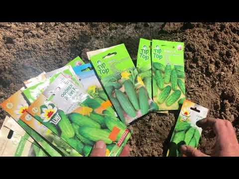 Посадка огурцов в открытый грунт.Май 2020   выращивание   правильно   посадить   открытый   открытом   огурцов   сажать   огурцы   грунте   улице