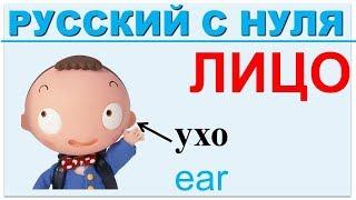 Части тела на русском для иностранцев. ЛИЦО.