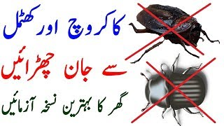 How To Get Rid Of Bed Bugs - Lal Bags In Kitchen Or Room Remove Just A Mint This Is Free For ALL