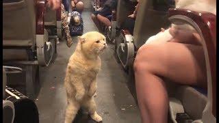 Смешные Коты 2020 Приколы с Котами и Кошками Funny Cats