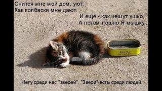 Ищу хороших людей для котенка.