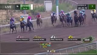 Vidéo de la course PMU PREMIO GOYITA