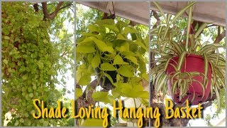 best-plants-for-hanging-basket-that-grow-in-shade-shade-loving-hanging-basket-that-garden-girl