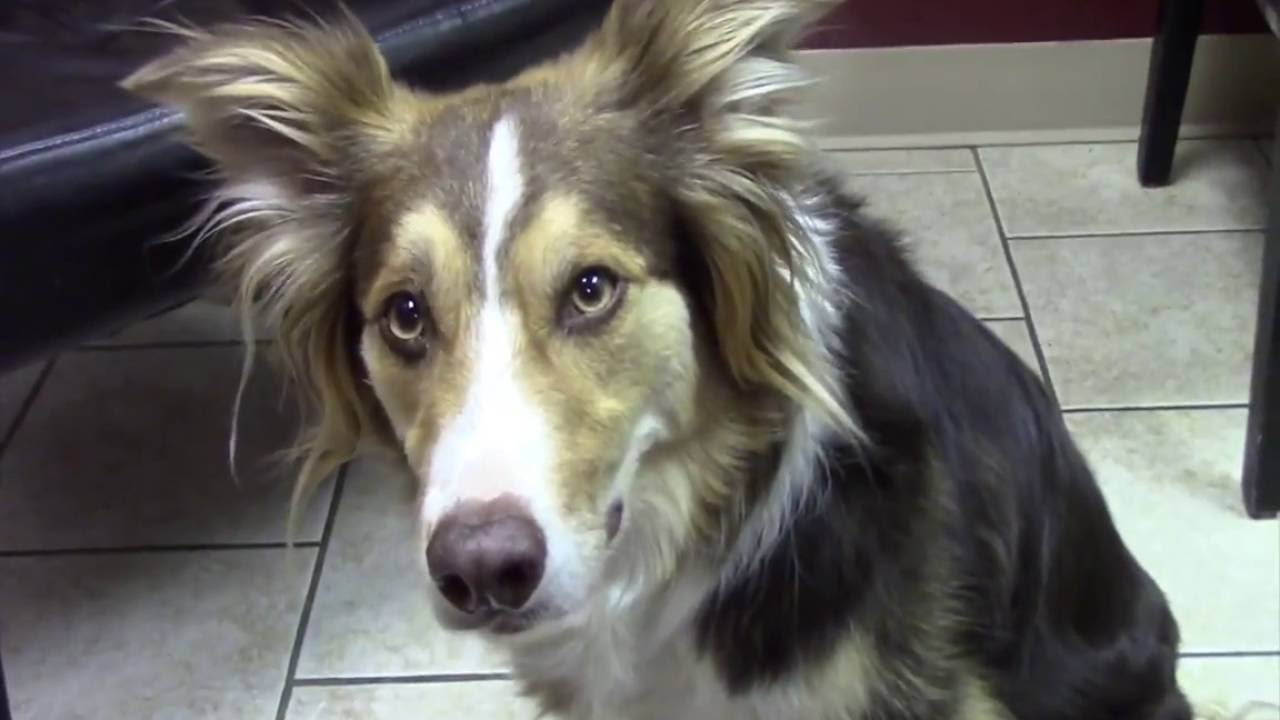 Reverse Sneezing In Dogs - Causes And What You Can Do About It