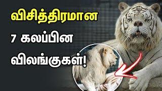 விசித்திரமான  7 கலப்பின விலங்குகள்!  | Athirchi Video