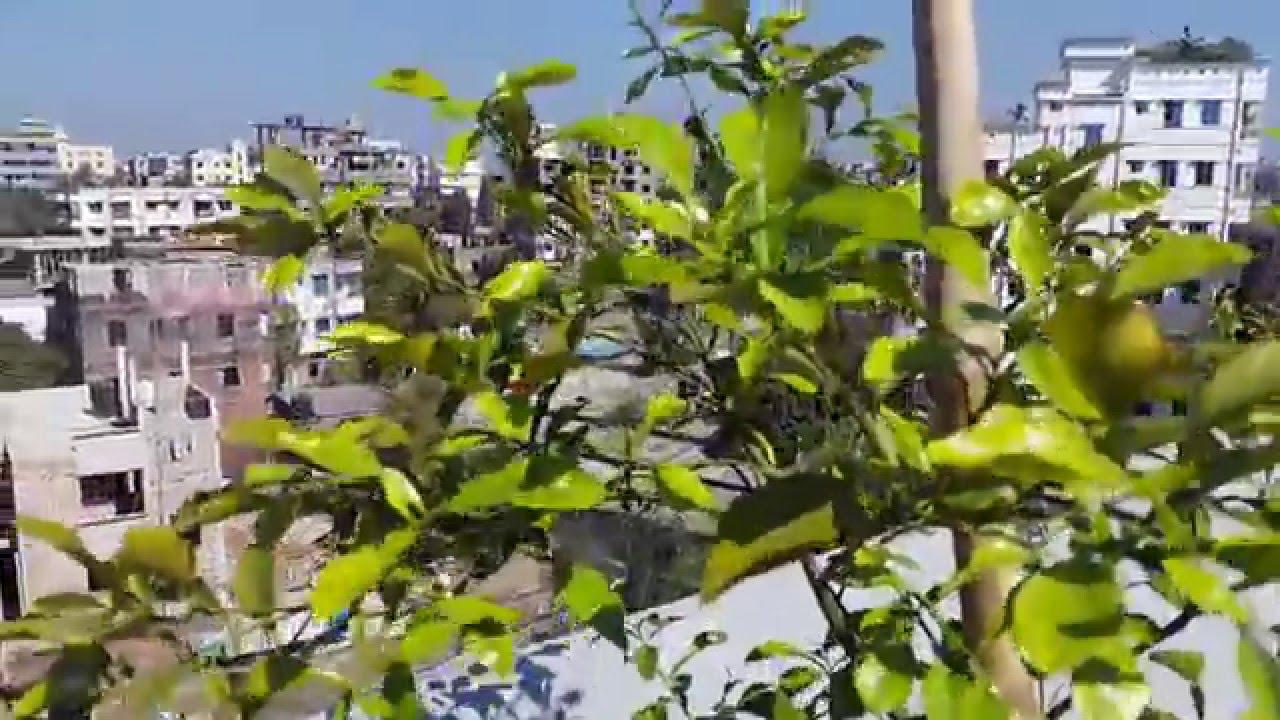 Rooftop Gardening rooftop gardening ( dhaka bangladesh ) nov 20, 2015 - youtube