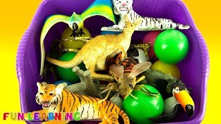Learn Zoo Animals For Kids with Wild Animals Toys and Learn Colors
