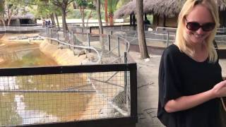 Krokodyle w Torremolinos , Hiszpania  - wizyta w parku krokodyli