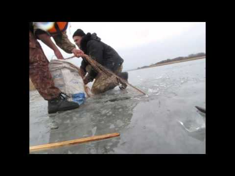 Зимняя рыбалка снимаем сети - карп, зеркальный, сазан. fishing with nets.
