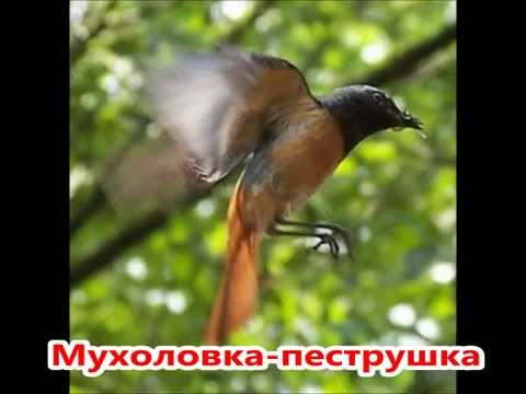 Миграция птиц Википедия