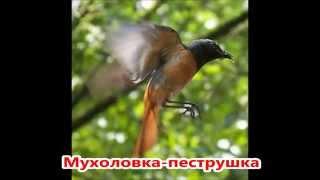 Перелетные птицы России. Презентация 4 класс.