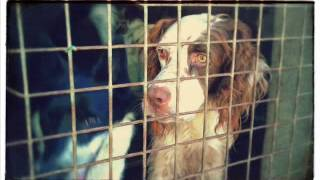 "Cocker's Angel - Cocker Spaniel Rescue Italia ""video Album"""