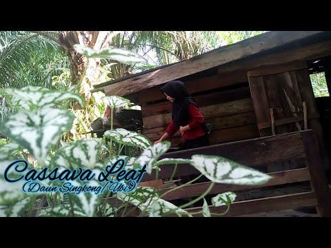 Gadis Ini Memetik Daun Ubi Dan Memasaknya Dengan Lezat-Pick Cassava Leaves And Make Delicious Dishes