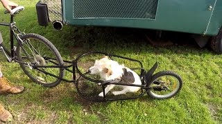 One Wheel Bicycle Trailer from Ebay - Aosom - Cheap bike trailer!
