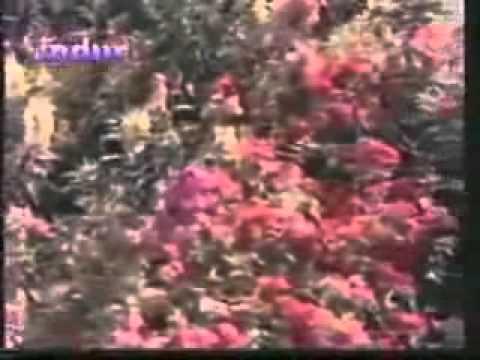 Jahan dal dal pe sone ki-Sikandar-e-azam-Rafi-Rajendra krishan-skverma rohini