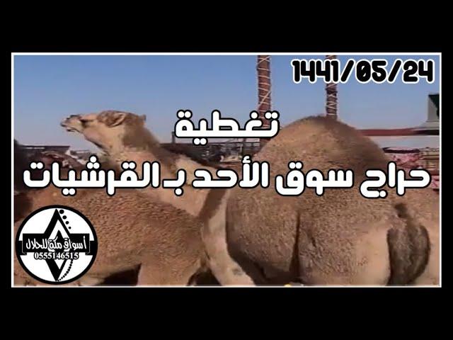 تغطية حراج سوق الأحد الطايف القرشيات 1441 05 24 هـ Youtube