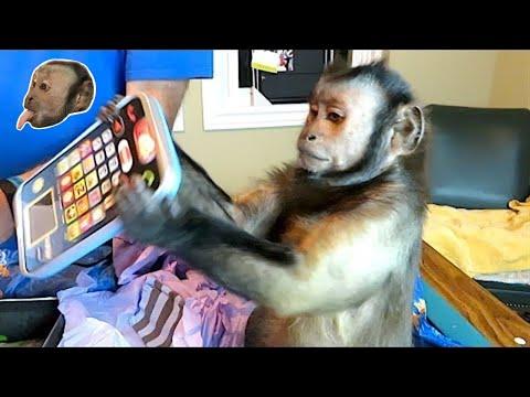 Monkey BIRTHDAY Mail!