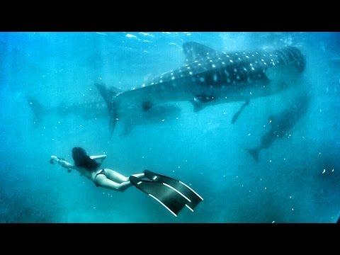 自由潛水 Oslob 宿霧 與鯨鯊共舞 dance with whaleshark