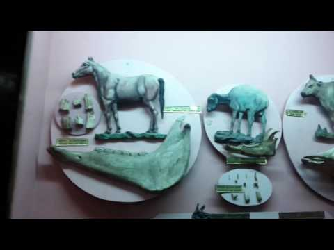 Government museum chennai part1