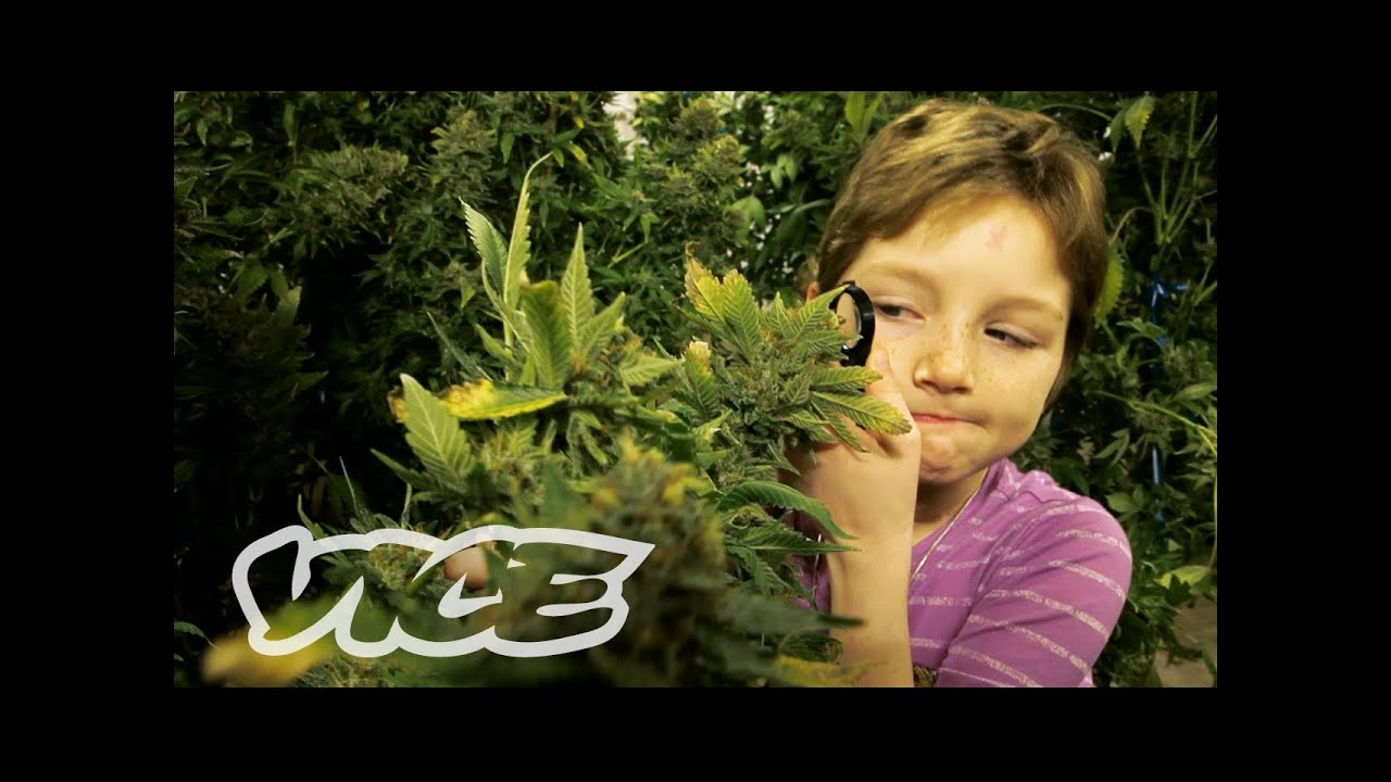 Stoned Kids (Documentary About Children Getting High On Medical Marijuana For Their Diseases)