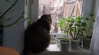Как наша кошка смотрит  из окна