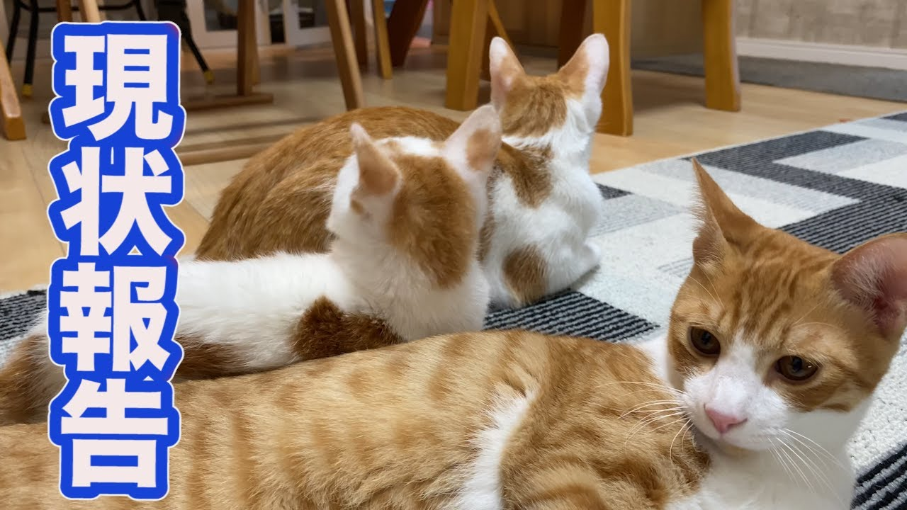 Youtube 猫 やまねこ と