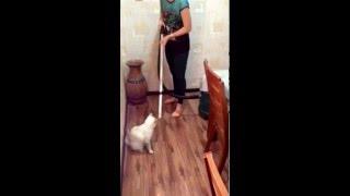 Кот и пылесос 2 от РУССКАЯ ПРИРОДА