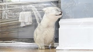 Cats VS INVISIBLE WALL CHALLENGE!