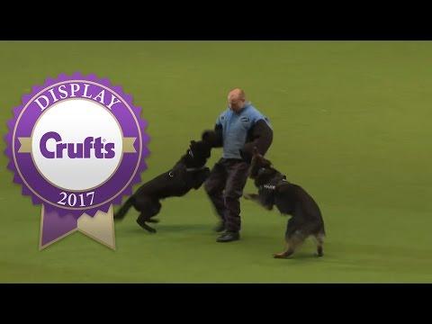 West Midlands Police Dog Display | Crufts 2017