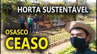 Mudas de Moringa e outras na Horta Sustentável Ceaso em Osasco