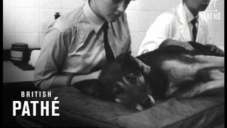R.a.f. Dogs'  New Home (1963)