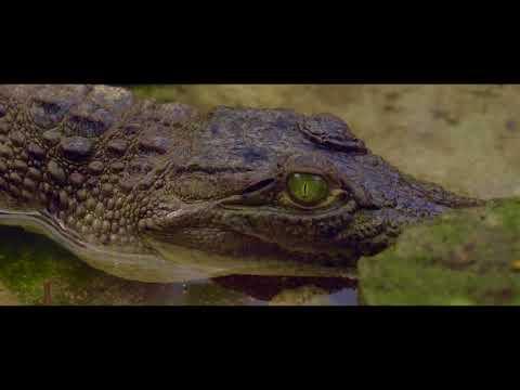 Our Fragile Earth Ep. 04: Coron Island Protected Area