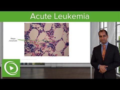 Acute Leukemia: Etiology & Subtypes – Pathology | Lecturio