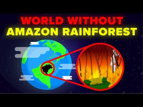 World Without the Amazon Rainforest