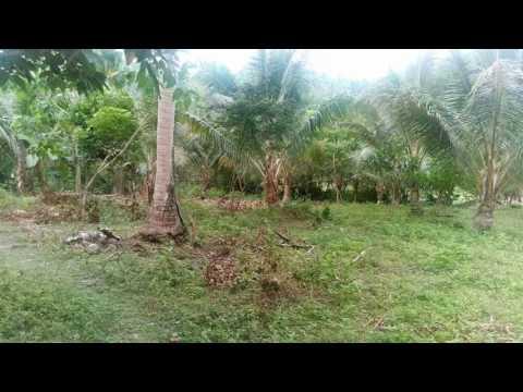 QUEZON Province Farm