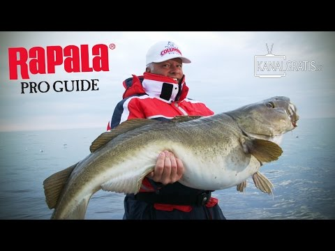 Rapala Pro Guide | Halibut and Cod Fishing at Sørøya