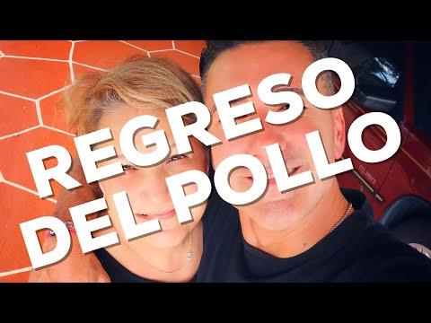 REGRESO DEL POLLO