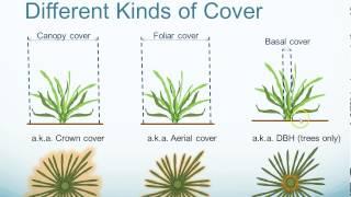 Vegetation Cover Introduction
