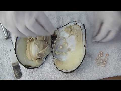 Monster Oyster Opening