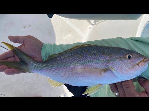 Keys Reef Fishing Madness!!