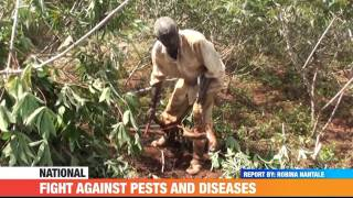#PMLive: Fight Against Pests and diseases