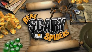 Real Scary Spiders Android GamePlay Trailer (HD) [Game For Kids]