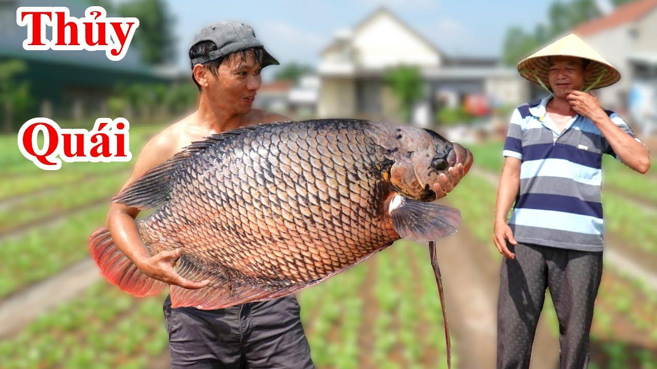Không Ngờ ! Bắt Thủy Quái Khổng LỒ / Quái Vật Cá Tai Tượng To Nhất Vùng.Amazing Catch Big Fish