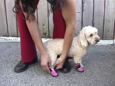 how to put on pawz dog boots