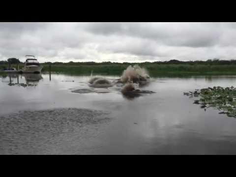 St. John's river: Thalassophobia