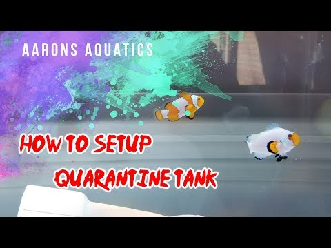 How To Setup a Quarantine Tank (Saltwater - Clownfish!)