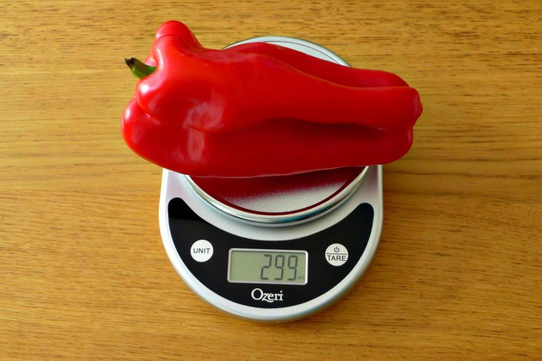 Ozeri Pronto Digital Scale Review - Kitchen & Food Scale