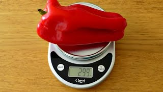 Ozeri Pronto Digital Scale Review - Kitchen & Food Scale