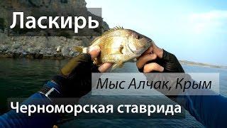 Чёрное море, мыс Алчак, Крым. Ставрида. Ласкирь. 2016/07.(Морская ловля с берега, или